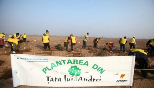 Kamrad - Plantarea in Tara lui Andrei